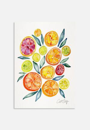 Cat Coquillette Citrus Slices Art